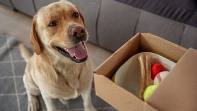 Photo of A Brief History and Way forward for Pet Food Online